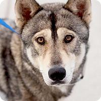 Adopt A Pet :: URGENT WILL DIE WED - Sacramento, CA