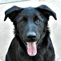 Adopt A Pet :: Baby Tom - Oakley, CA