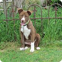 Adopt A Pet :: WREN - Bedminster, NJ