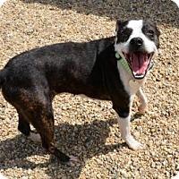 Adopt A Pet :: Ophelia - Lacon, IL