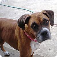 Adopt A Pet :: Princess Ann 4227 - Dayton, OH