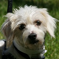 Adopt A Pet :: Ronald - Carlsbad, CA