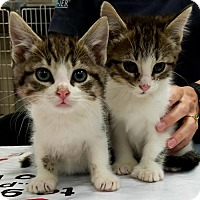 Adopt A Pet :: Bacall & Bogey - Knoxville, TN
