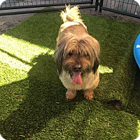 Adopt A Pet :: Rossi - Las Vegas, NV