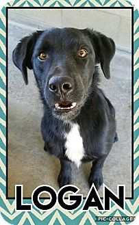 Labrador Retriever Mix Dog for adoption in Edwards AFB, California - Logan