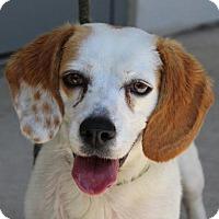 Adopt A Pet :: Bubbles - Allentown, PA