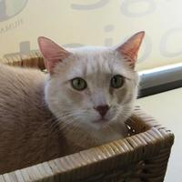 Adopt A Pet :: Milo - Northfield, MN