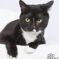 Adopt A Pet :: Jelly - Tinley Park, IL