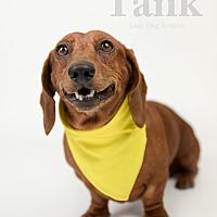 Adopt A Pet :: Tank - Valley Center, CA