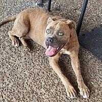 Adopt A Pet :: Boots - Goodlettsville, TN