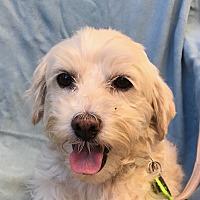 Adopt A Pet :: ROSIE - San Diego, CA