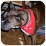 Photo 2 - Boxer Dog for adoption in Middlesex, New Jersey - Buster