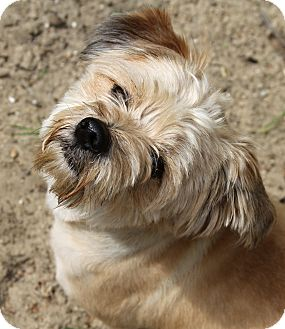 Terrier (Unknown Type, Small) Mix Dog for adoption in Muskegon, Michigan - Palmer