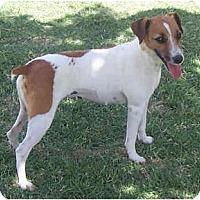 Adopt A Pet :: ALIZA - Phoenix, AZ