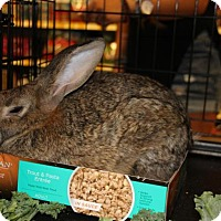 Adopt A Pet :: Sasquash - Hazlet, NJ