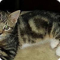 Adopt A Pet :: Tilly - Lebanon, PA