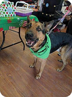 German Shepherd Dog Mix Dog for adoption in Winnipeg, Manitoba - BUDDY