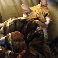 Adopt A Pet :: Samantha - Somerset, KY