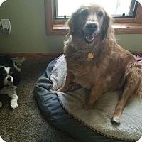 Adopt A Pet :: Isabella - Denver, CO
