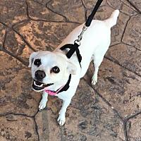 Adopt A Pet :: Whilhelmina - Sacramento, CA