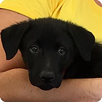 Adopt A Pet :: Kai - North Richland Hills, TX