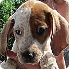 Adopt A Pet :: Daria