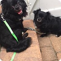 Adopt A Pet :: Comet & Tobie - N. Babylon, NY