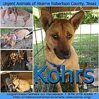 Adopt A Pet :: Kohrs - Hearne, TX