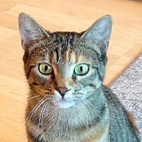 Adopt A Pet :: Cassidy - Toronto, ON