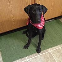 Adopt A Pet :: Duey - Marion, NC