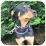 Photo 4 - Rottweiler Dog for adoption in Tracy, California - Rachel