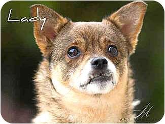 Pomeranian/Pug Mix Dog for adoption in Vista, California - Lady