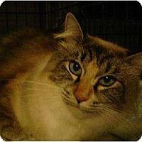 Adopt A Pet :: BIG BERTHA - Powder Springs, GA