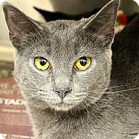 Adopt A Pet :: Mattie - Xenia, OH
