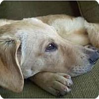 Adopt A Pet :: Jelly - Alexandria, VA