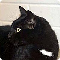 Adopt A Pet :: Zuke - New Port Richey, FL