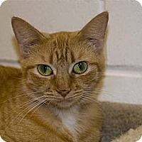 Adopt A Pet :: ChaCha - New Port Richey, FL