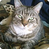 Adopt A Pet :: Emma - N. Billerica, MA