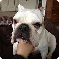 Adopt A Pet :: Steve - Strongsville, OH