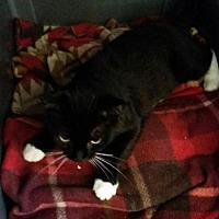 Adopt A Pet :: Formal - Loganville, GA