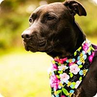 Adopt A Pet :: Momo - Crescent City, CA