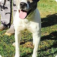 Adopt A Pet :: Raine - Ocala, FL