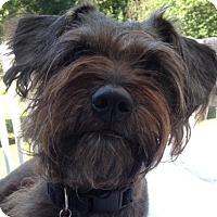 Adopt A Pet :: Jackson NJ - Shay - New Jersey, NJ