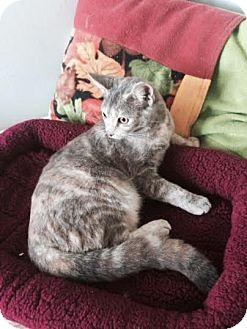 Calico Cat for adoption in Harrisburg, North Carolina - Karla