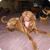 Adopt A Pet :: Cadbury - North Jackson, OH