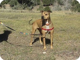 Terrier (Unknown Type, Medium) Mix Dog for adoption in Ridgway, Colorado - JoJo