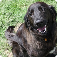 Adopt A Pet :: Siena - Huntsville, AL
