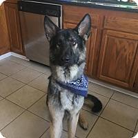 Adopt A Pet :: Bandit(CL) - Greensboro, NC