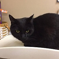 Adopt A Pet :: Will - Beckley, WV