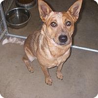 Adopt A Pet :: Deucett - Buchanan Dam, TX